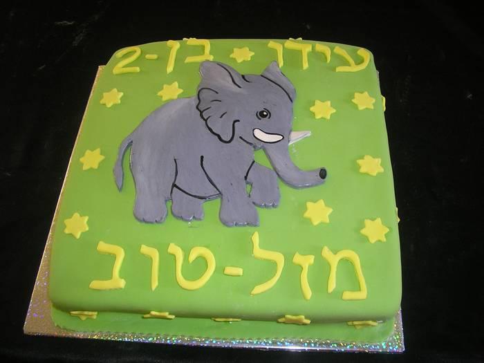 עוגת שוקולד ליום הולדת פיל מעוצב